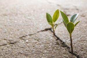 Esempio di come le piante possano essere resilienti.