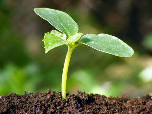 Flourishing in una prospettiva edonica ed eudaimonica